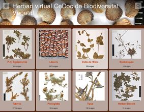 CeDocBiV database image