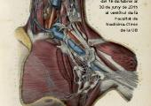 Postal exposició virtual L'Anatomia com a art, ciència i disciplina
