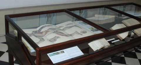 Fotografía de un detalle de la mesa dedicada a la anatomía científica