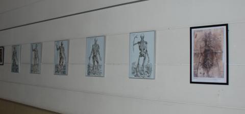 Fotografía de un detalle de pósters dedicados a la anatomía científica