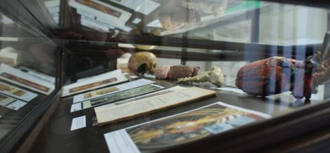 Fotografia d'un detall de la taula dedicada a la docència de l'anatomia