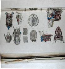 Bourgery, J. M. (Jean Marc), 1797-1849. [Anatomie élémentaire ...]