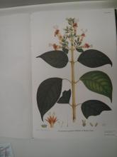 Làmina flora