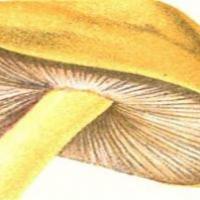 """""""Llibres temàtics sobre cuina"""". Exposició virtual al CRAI Biblioteca del Campus de l'Alimentació de Torribera"""