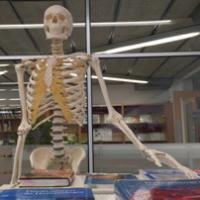 Nou esquelet artificial al CRAI Biblioteca del Campus Bellvitge