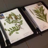 Nou herbari docent de plantes medicinals al CRAI Biblioteca de Farmàcia