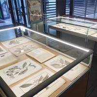 Mostra de gravats de Laurographia. Exposició al CRAI Biblioteca de Biologia