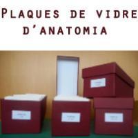 """""""Plaques de vidre d'anatomia del CRAI Biblioteca de Medicina"""". Nova col·lecció temàtica"""