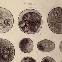 Mostra de plaques i làmines del CRAI Biblioteca de Biologia