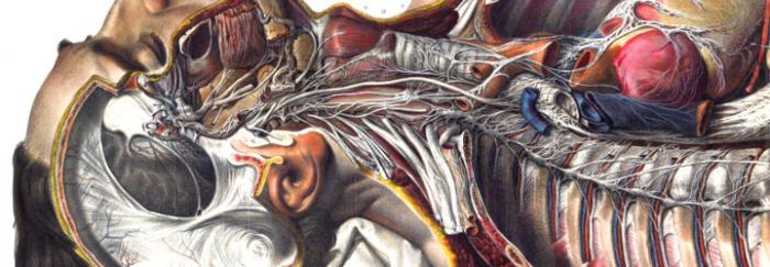 """Imatge de """"Tratado la anatomía del hombre / por el doctor Bourgery ; con reproducciones de láminas litografiadas según el natural por N.H. Jacob"""""""