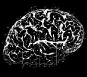 Imatge d'un cervell